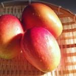 マンゴーとパパイヤの味や食べ方の違い!栄養の効果や種類も違う!?
